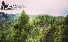 Falesia in Agordino - Mesaroz - Cencenighe Agordino Agordino