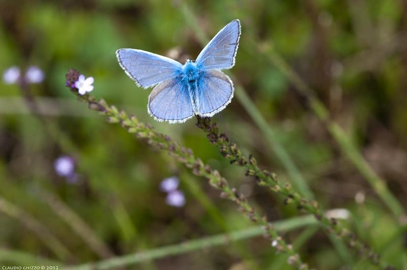Farfalle delle Dolomiti di Claudio Ghizzo