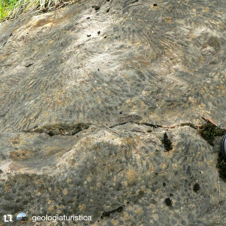 Fossili marini a Malga Framont, Agordo, Dolomiti