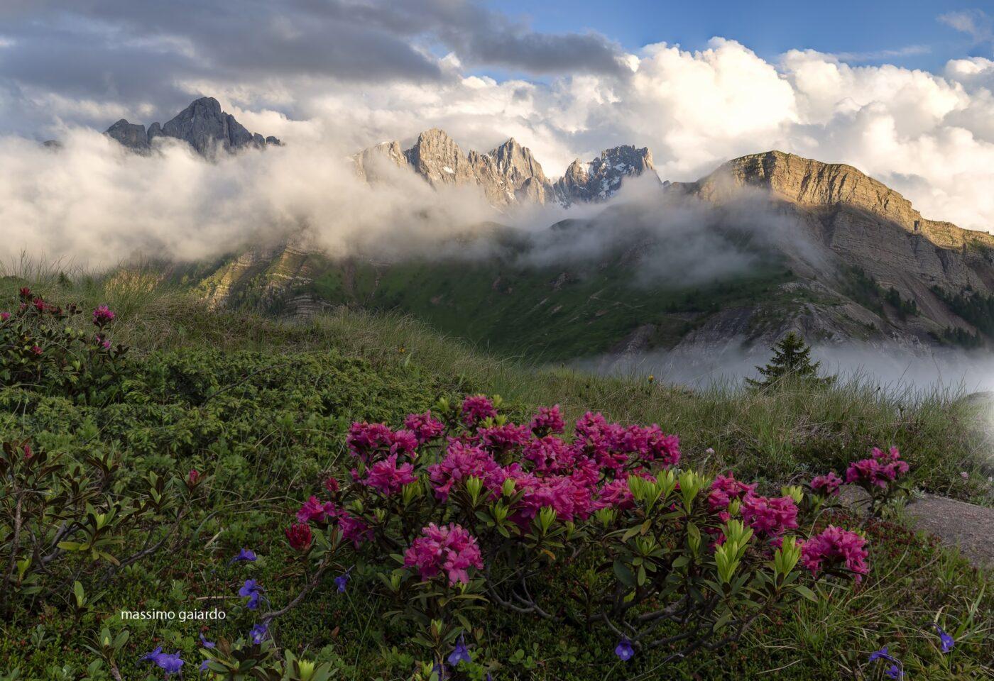 Passo Valles con rododendri di Massimo Gaiardo