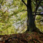 foliage agordino dolomiti