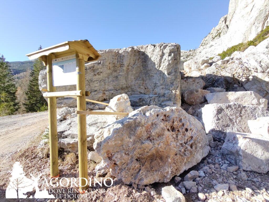 i fossili della torre venezia in val corpassa