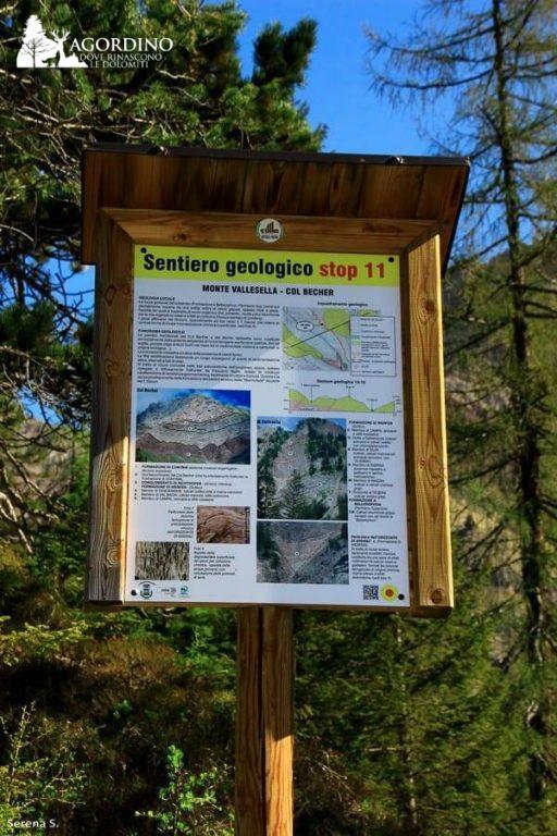 Il sentiero geologico del torrente Gavon - Stop 11 foto di Serena Scardanzan